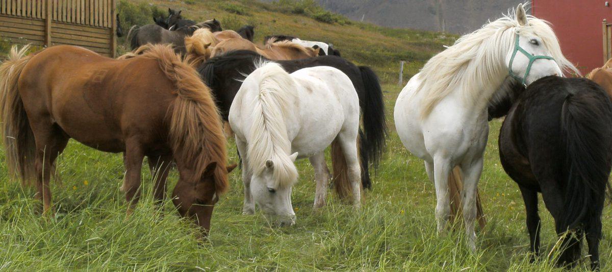 """""""Dem Pferd geht´s gut – dem Reiter auch"""" Tagesworkshop Gesundheitsvorsorge in Theorie und Praxis,"""