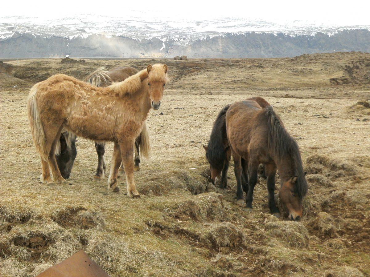 KPU bei Pferden ist behandelbar