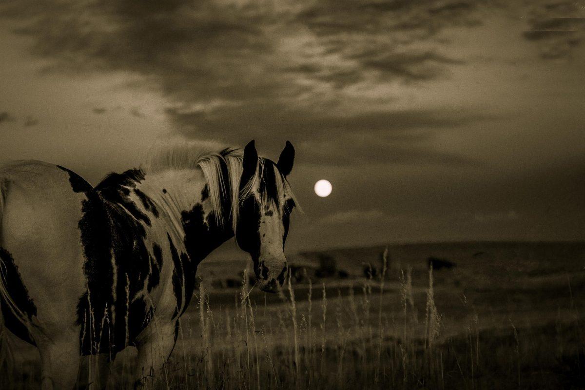 Was hilft bei Arthrose beim Pferd?