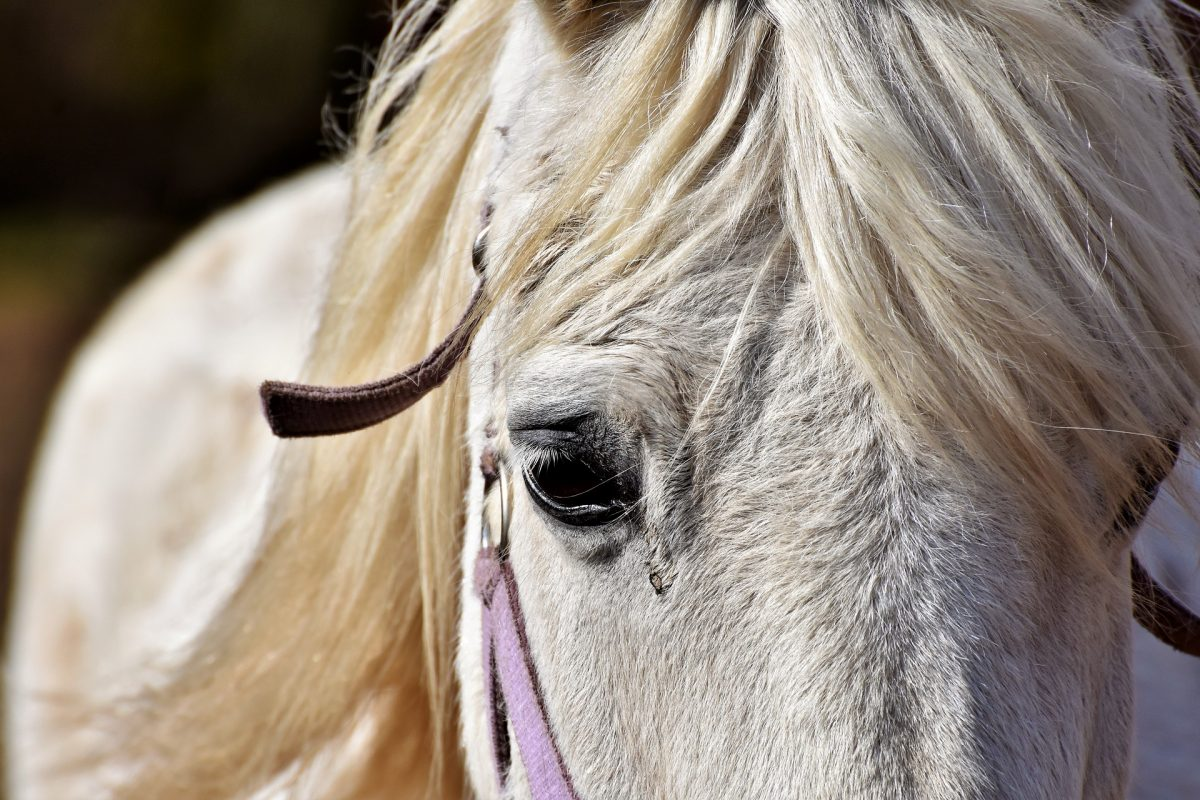 9 Punkte wie Du Dein Pferd vor Arthrose schützen kannst